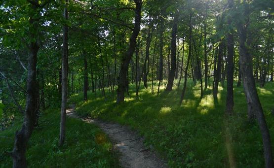Minnesota Trail
