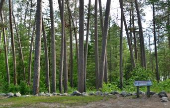Minnesota Trees