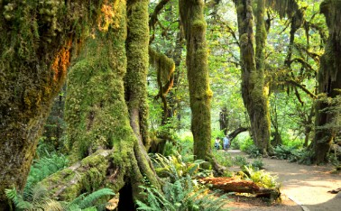 best-campgrounds-olympic-national-park-washington-hoh-campground-hall-of-mosses