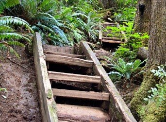 best-hiking-trails-olympic-national-park-washington-second-beach-headland-trail