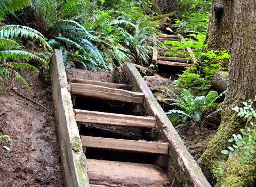 best-hiking-trails-olympic-national-park-washington-second-beach-headland-trail